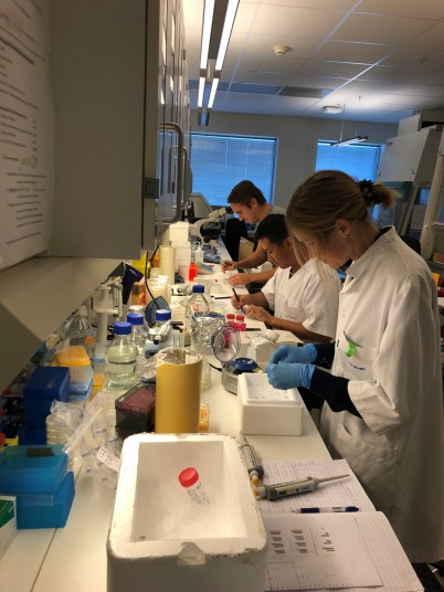 busy-fang-lab-1-2